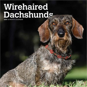 Wirehaired Dachshunds Calendar 2014