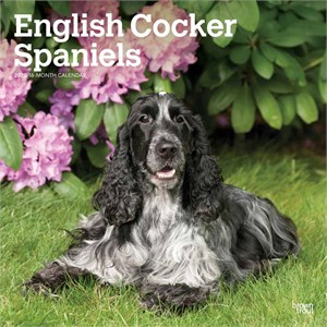  English Cocker Spaniels Calendar 2013