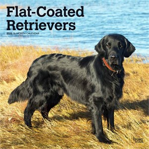Flat-Coated Retrievers Calendar 2013