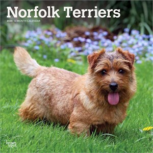 Norfolk Terriers Calendar 2013