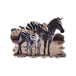 Zebra T-Shirt - Exotic Style