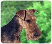 Welsh Terrier Mousepad