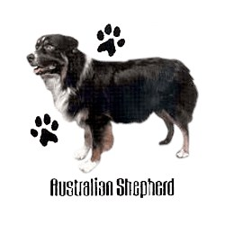 Australian Shepherd T-Shirt - Profiles