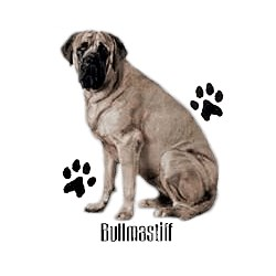 Bullmastiff T-Shirt - Profiles