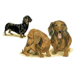 Dachshund T-Shirt - Trio of Three