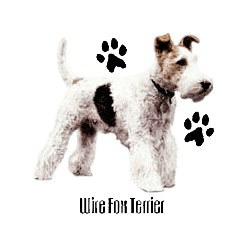 Wire Fox Terrier T-Shirt - Profiles