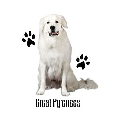 Great Pyrenees T-Shirt - Profiles