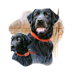 Black Lab T-Shirt - Jim Killen