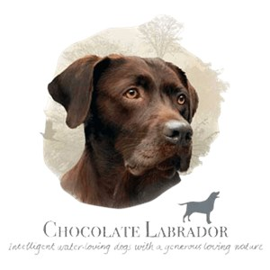 Chocolate Lab T-Shirt - Jim Killen