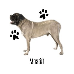 Mastiff T-Shirt - Profiles