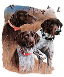 German Shorthaired Pointer T-Shirt - Jim Killen