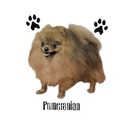 Pomeranian T-Shirt - Profiles