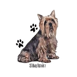 Silky Terrier T-Shirt - Profiles