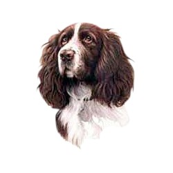 Springer Spaniel T-Shirt - Jim Killen