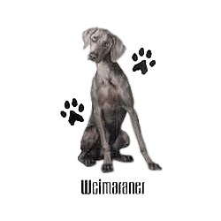 Weimaraner T-Shirt - Profiles