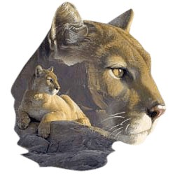 Cougar T-Shirt - Vivid Detail