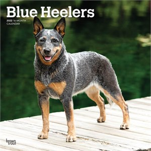 how to draw a blue heeler dog
