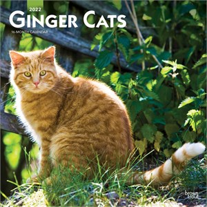  Ginger Cats Calendar 2013