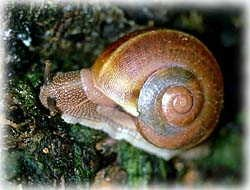 Snail T-Shirt - Photo