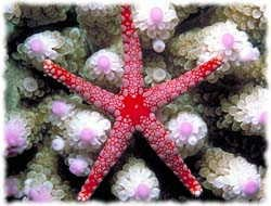Starfish T-Shirt - Photo