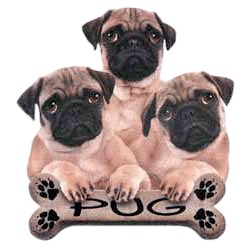 Pug T-Shirt - Trio of Three