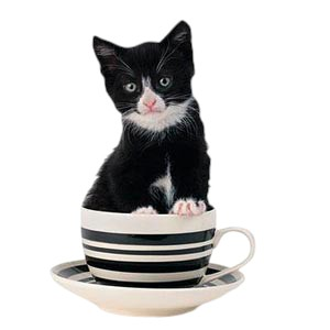 Black & White Cat T-Shirt - Tuxedo Cat