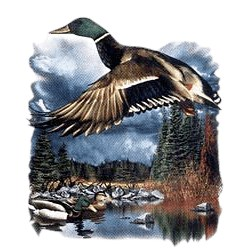 Duck T-Shirt - In Flight