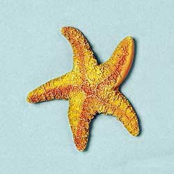 Starfish Magnet