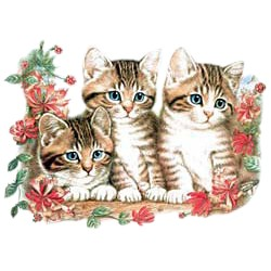Tabby Cat T-Shirt - Shorthaired Tabbies