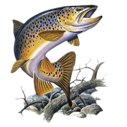 Trout T-Shirt - Colorfully Illustrated