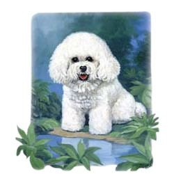 Bichon Frise T-Shirt - Linda Picken