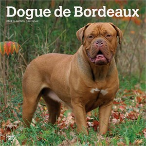  Dogue de Bordeaux Calendar 2013