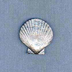 Shell Pin