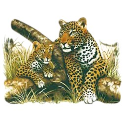 Leopard T-Shirt - With Cub