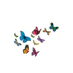 Butterfly T-Shirt - Cornucopia of Color
