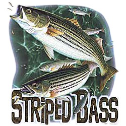 Bass T-Shirt - Striped Bass