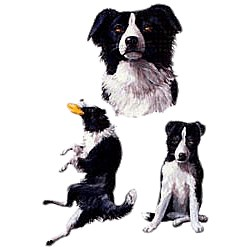 Border Collie T-Shirt - Collage