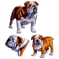Bulldog T-Shirt - Collage
