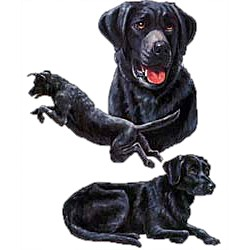Black Lab T-Shirt - Collage