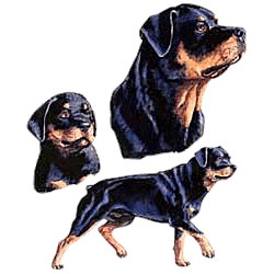 Rottweiler T-Shirt - Collage