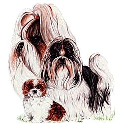 Shih Tzu T-Shirt - Collage