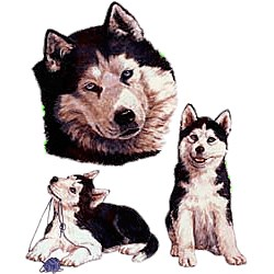 Siberian Husky T-Shirt - Collage