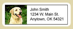 Yellow Lab Address Labels