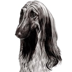 Afghan Hound T-Shirt - Eye Catching Detail