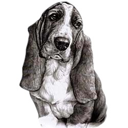 Basset Hound T-Shirt - Eye Catching Detail
