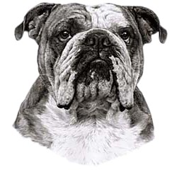 Bulldog T-Shirt - Eye Catching Detail