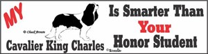 Cavalier King Charles Bumper Sticker Honor Student