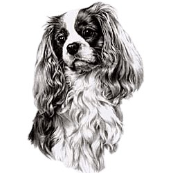 Cavalier King Charles Spaniel T-Shirt - Eye Catching Detail