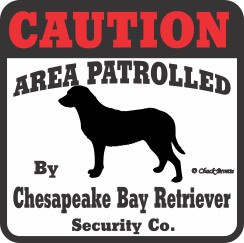 Chesapeake Bay Retriever Bumper Sticker Caution