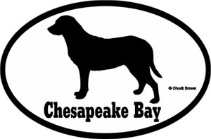 Chesapeake Bay Retriever Bumper Sticker Euro